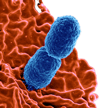 BIOL108 - Medical Microbiology | Clifton Franklund